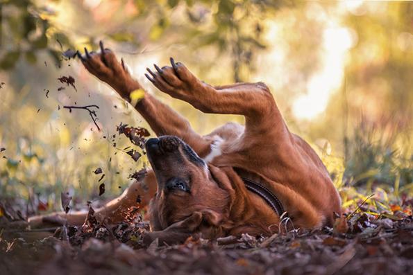 Ова се најдобрите фотографии со кучиња за 2019 година
