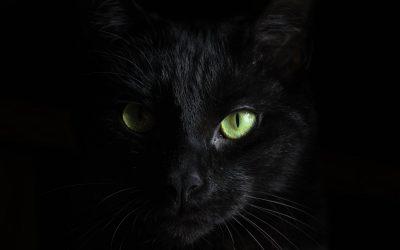 Човек ја внесува својата мачка во холивудски филмови, а резултатите се урнебесни!