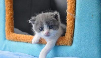 Родена е првата клонирана мачка во Кина
