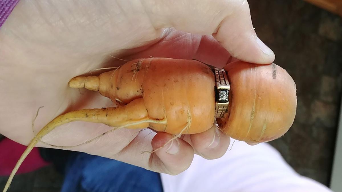 Жена после 13 години го пронашла својот изгубен веренички прстен во нејзината градина