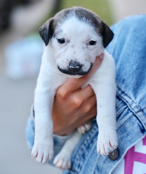 Запознајте го Салвадор Доли, најслаткото кученце со мустаќи