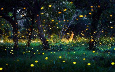 Светулките се пред губење на нивната способност за емитување светлина, но тоа може да се спречи