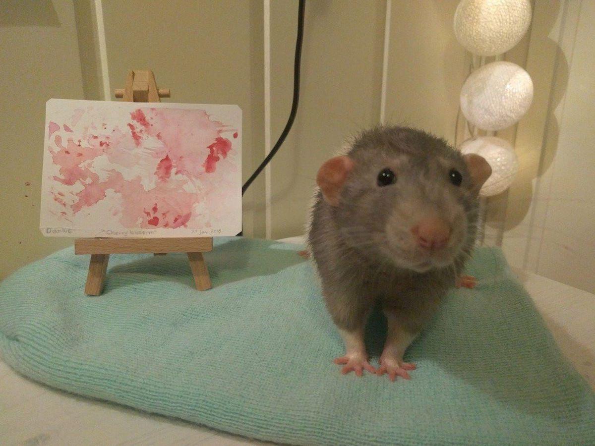 Ако не се насмеавте денес, погледнете го Дариус, глувчето што црта