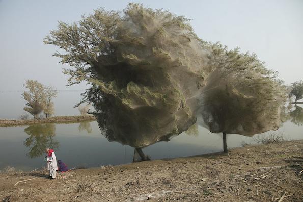 Фотографии од природни феномени кои ќе ве изненадат до онесвестување