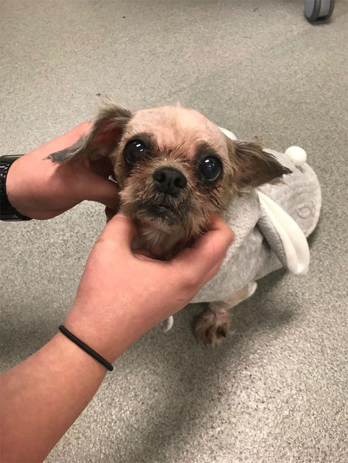 Куче кое не можело ни да се движи поради премногу заплетканото крзно конечно добило нов изглед