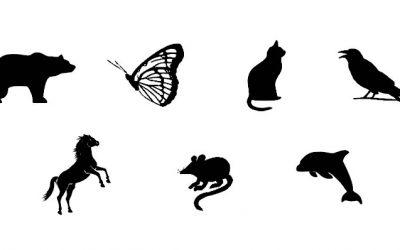 Магичен тест: Во кое животно би сакале да се претворите?