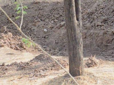 Можете ли да го пронајдете леопардот на сликата?