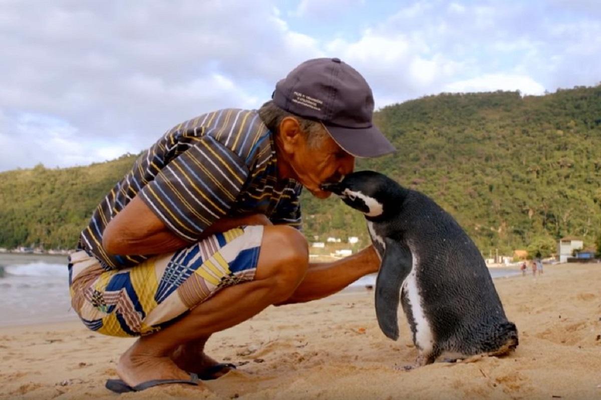 Пингвин патува 8,000 километри за да го види спасителот