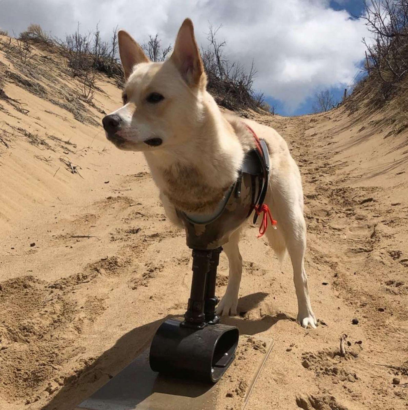 Авантурите на кучето со две нозе што наликува на бебе-кенгур