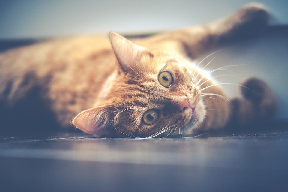 Зошто мачките секогаш нѐ игнорираат кога ги повикуваме?