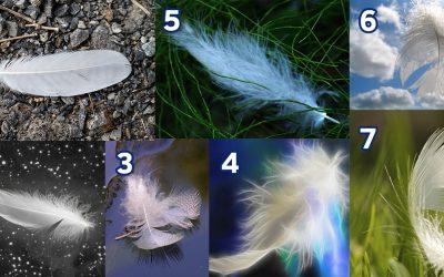 Изберете пердув и откријте ја пораката на вашите ангели
