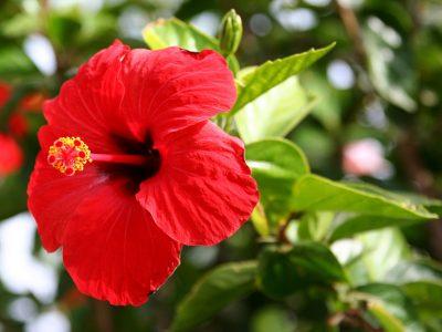 Пет собни растенија што привлекуваат пари, среќа и љубов