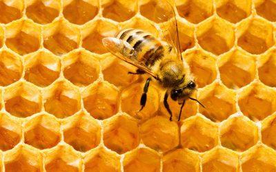 Пет интересни начини на употреба на пчелиниот восок