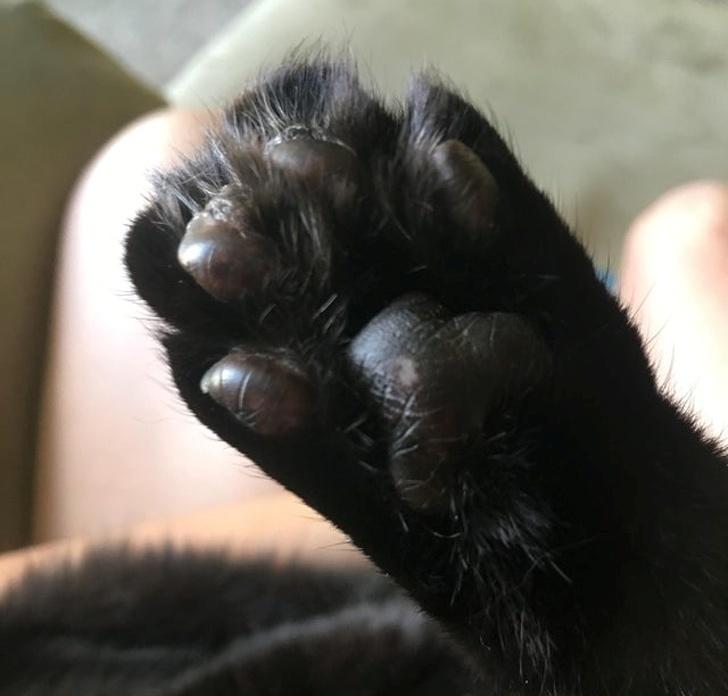 10 грешки што треба да престанат да ги прават сопствениците на мачки