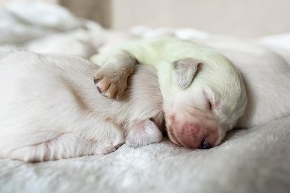 Запознајте го Мохито – зеленото куче!