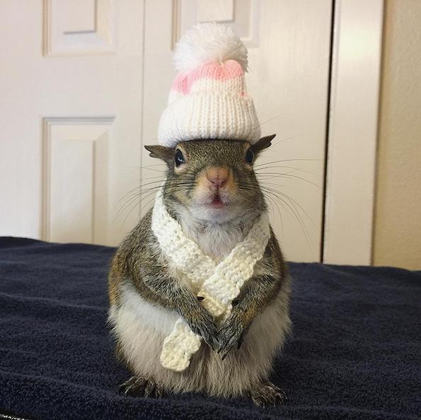 Има свое мече и ја обожува модата! Запознајте ја Џил: верверичката – трендсетерка!