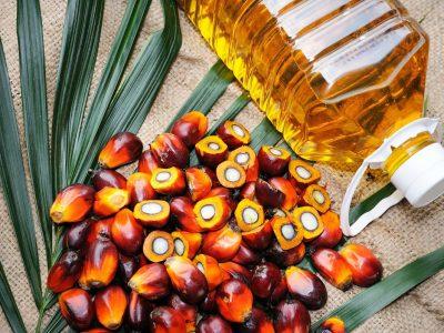 Дали палминото масло е здраво или штетно?