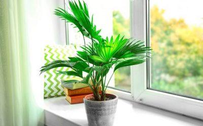 Доаѓа зима: Еве како да се грижите за вашите украсни растенија