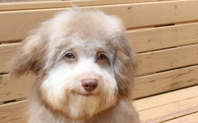 Кучето со човечка насмевка го освојува Интернетот