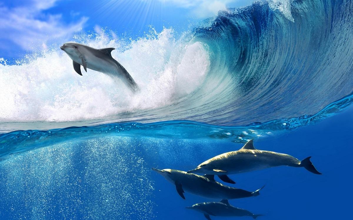 Дали знаевте дека најголем број од делфините ја користат повеќе десната страна?