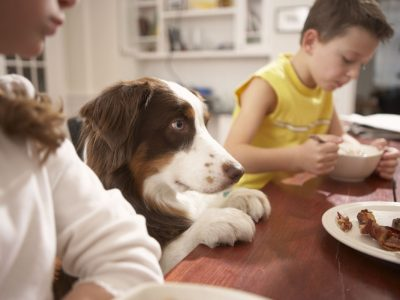 Која божиќна храна е опасна за кучиња и мачки?