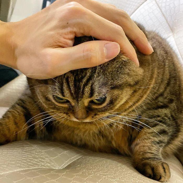 Оваа мачка ќе ви го освои срцето со нејзините смешни изрази