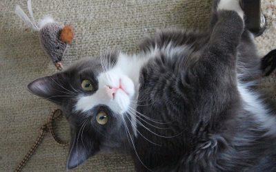 25 фотографии што покажуваат дека мачките се вистински чудовишта