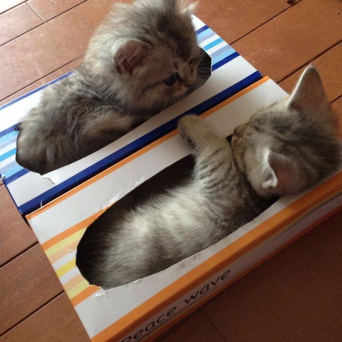 Истражување: Мачките толку многу сакаат кутии затоа што тие го намалуваат стресот