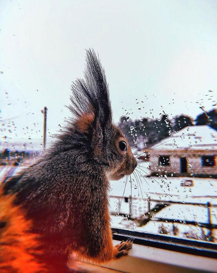 Момче спасило мала верверичка што не може да оди, а сега тие се најдобри пријатели