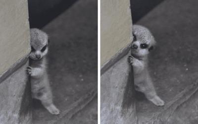 23 миленичиња кои се толку срамежливи, па едноставно ќе посакате да ги прегрнете
