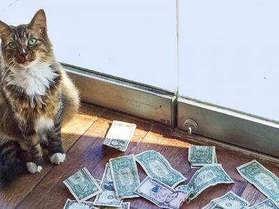 Една мачка била донесена во канцеларија за да ги улови глувците, но наместо тоа почнала да заработува