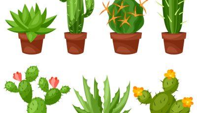 Изберете каков кактус најмногу ви се допаѓа и дознајте каква порака тој ви носи