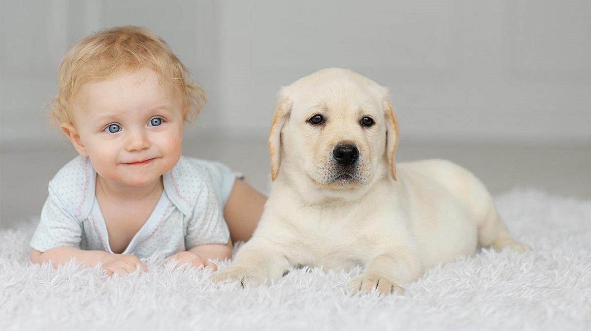 Кој не би ги сакал? Откриени се нови позитивни ефекти врз здравјето на децата кои растат со кучиња