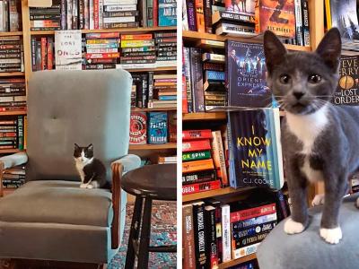 Мачињата се шетаат слободно во оваа книжарница, а купувачите дури може и да ги вдомат