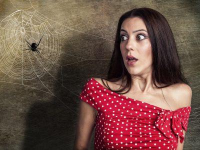 Се плашите од пајаци? Постои начин како да се ослободите од таа фобија