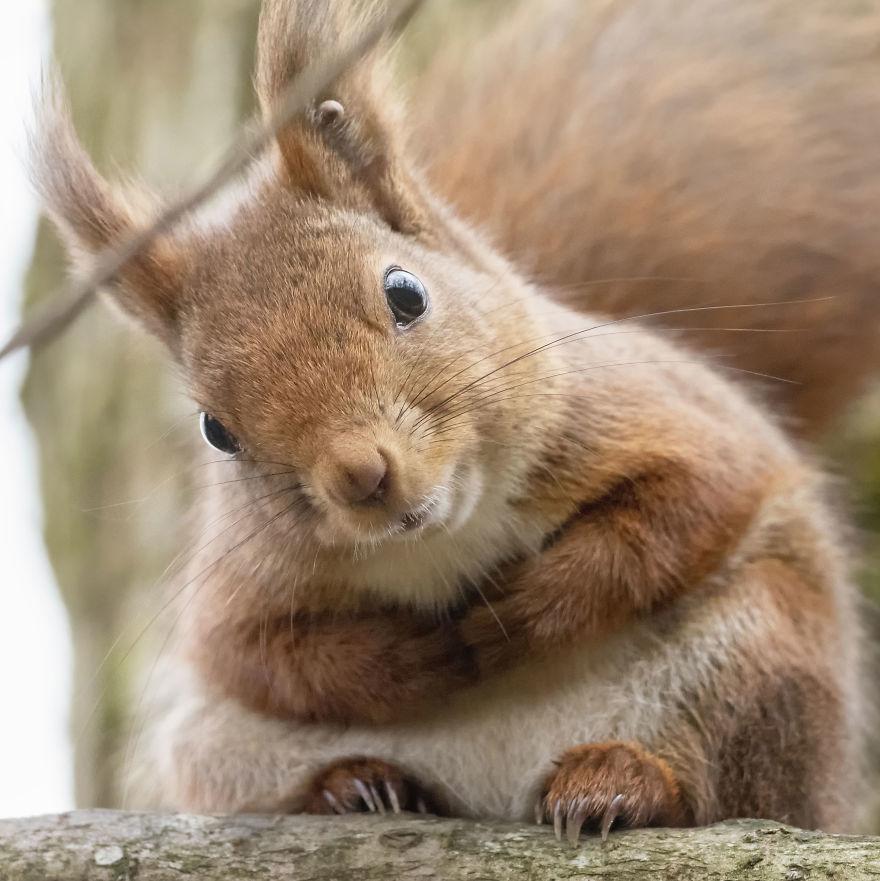 Смешни фотографии од верверички што ќе ви го разубават денот