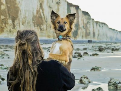 Авантурите на едно посвоено куче што се плаши да пешачи