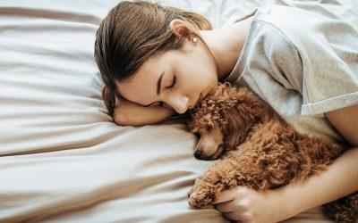 Какви се последиците од спиењето со куче или со мачка?