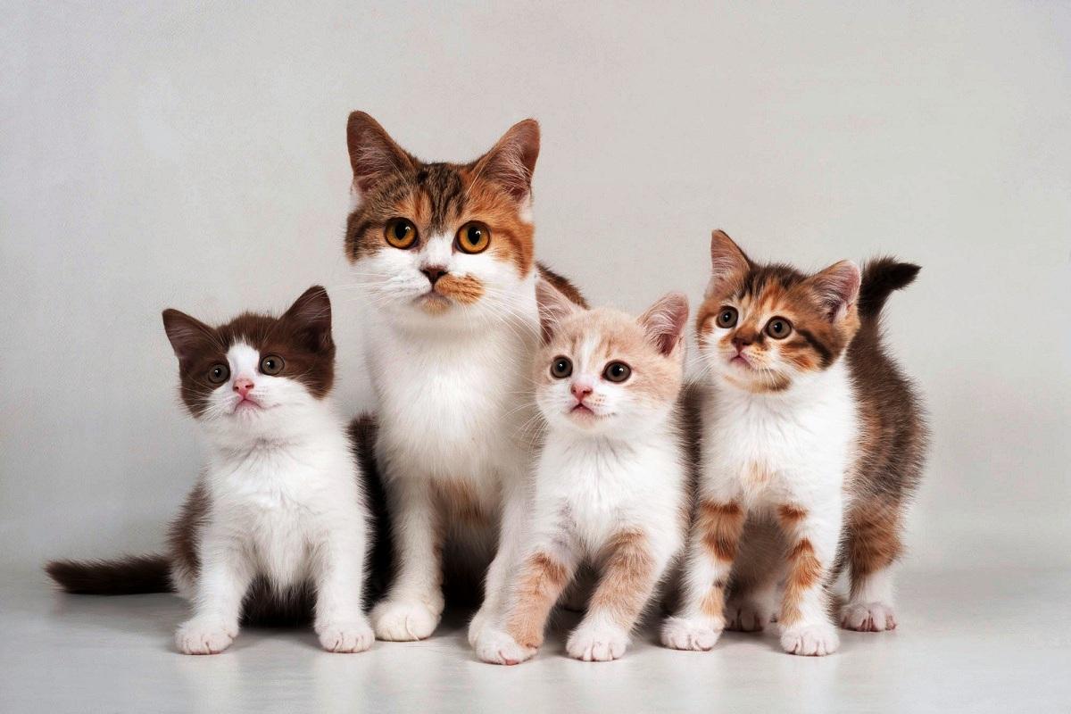 Овa се најчестите заблуди за мачките
