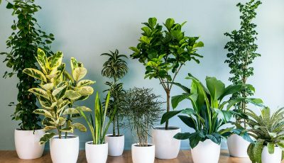 Трикови со кои вашите растенија ќе добиваат точно онолку вода колку што им е потребно