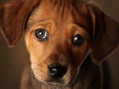 Дали знаете зошто вашето куче ја навалува главата додека разговарате? Пристигна одговорот и на ова прашање