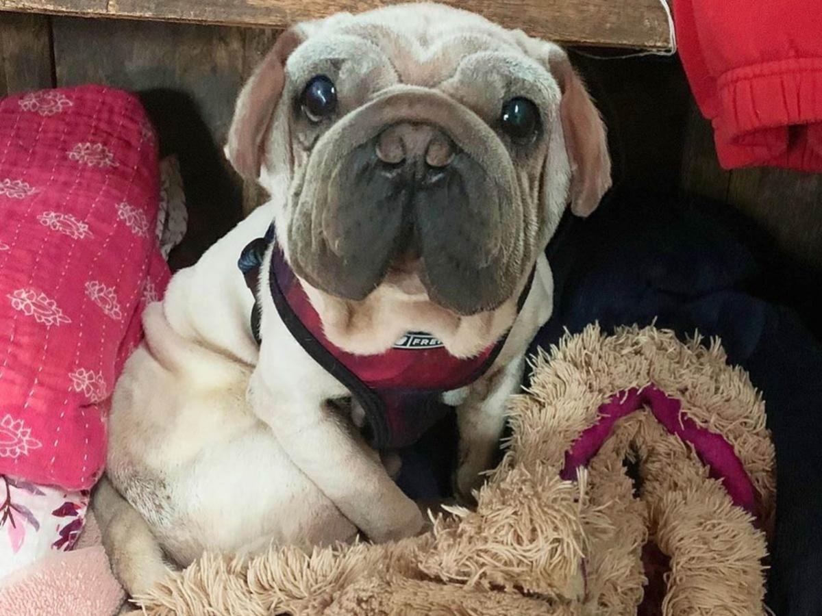 Запознајте го Морк, кученцето што било спасено од сигурна смрт, а изгледа како мал Јода