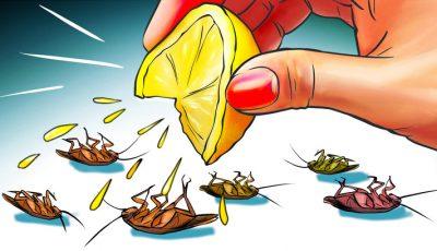 Како да се ослободите од 10 видови штетници што го напаѓаат вашиот дом?