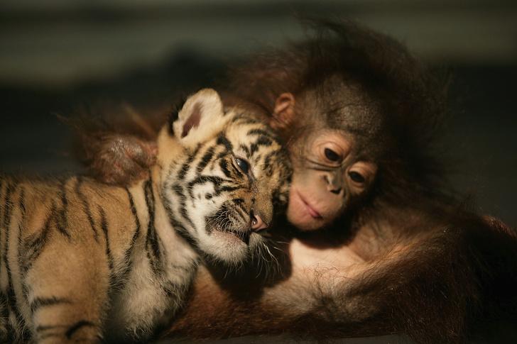 12 факти кои докажуваат дека животните може да бидат похумани од нас