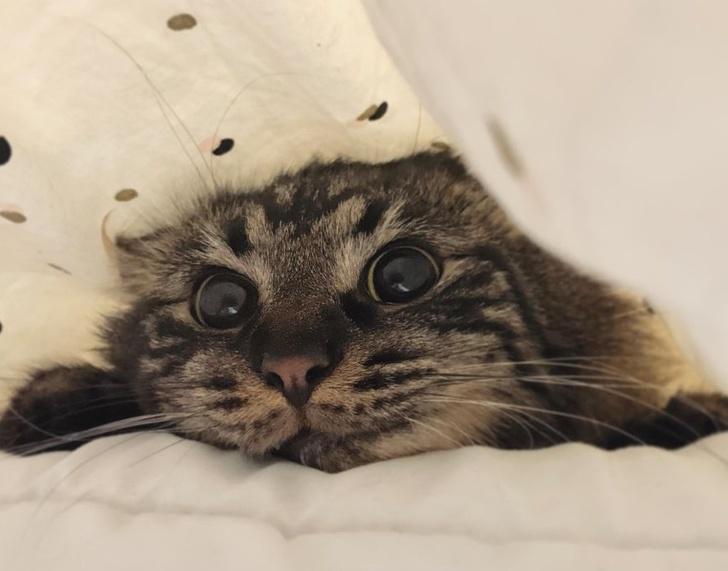 Една студија открива дека вашата мачка мисли дека сте ѝ родител
