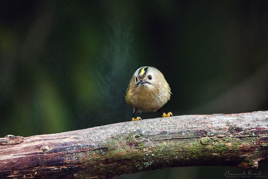 Откријте ги уникатните карактери на птиците преку овие 20 фотографии