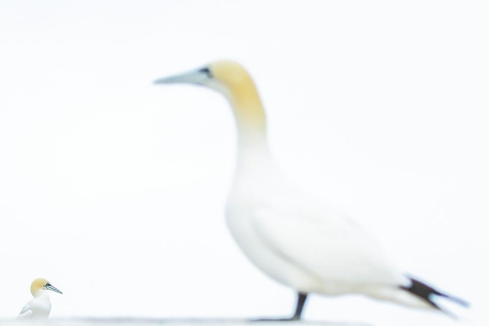 Неверојатни птици: 20 фотографии што се натпреваруваат за најдобрата фотографија на птици