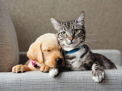 Како да препознаете дали вашите домашни миленичиња се левораки или деснораки?