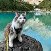 Мачорот Гери станал многу популарен по објавените фотографии од неговите планинарски авантури