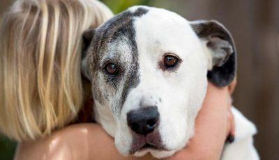 Една студија тврди дека кучињата во основа се слични на луѓето